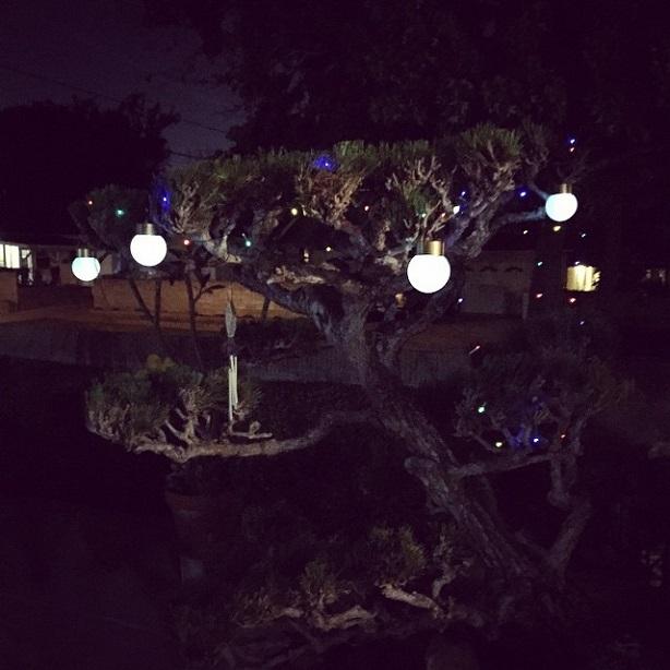 night time garden planetarium